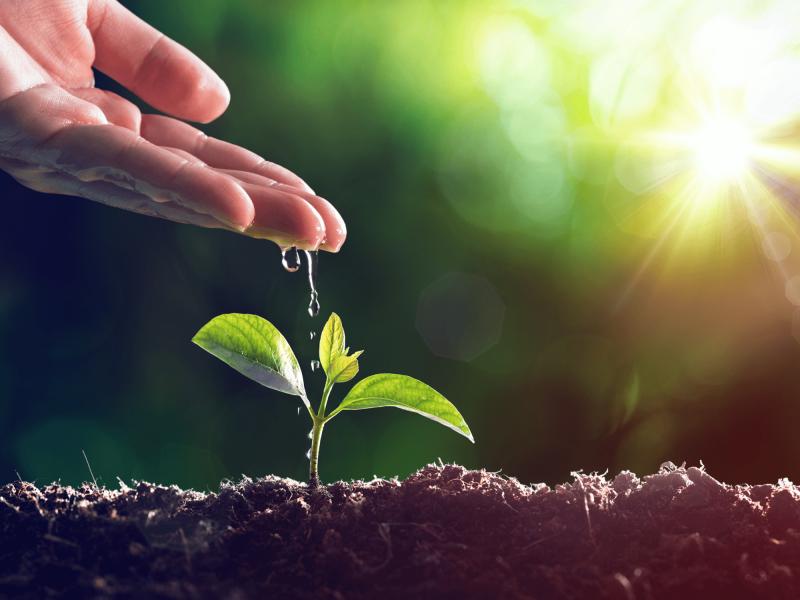 Meio Ambiente - Mãos largando gotas de água sobre uma planta pequena acima da terra - Água Viva